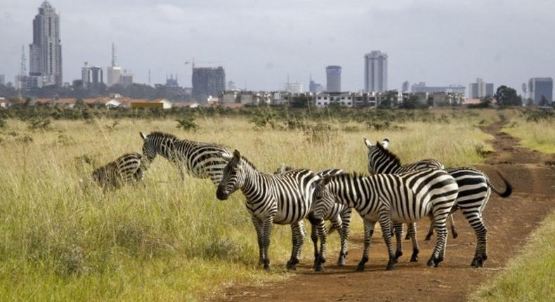 View of Kenya's Capital from Nairobi National Park.