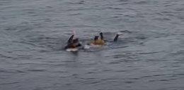 Rekin zaatakował surfera. Przerażające nagranie