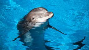 Turysta zabił delfina, by inni mogli zrobić sobie z nim zdjęcie