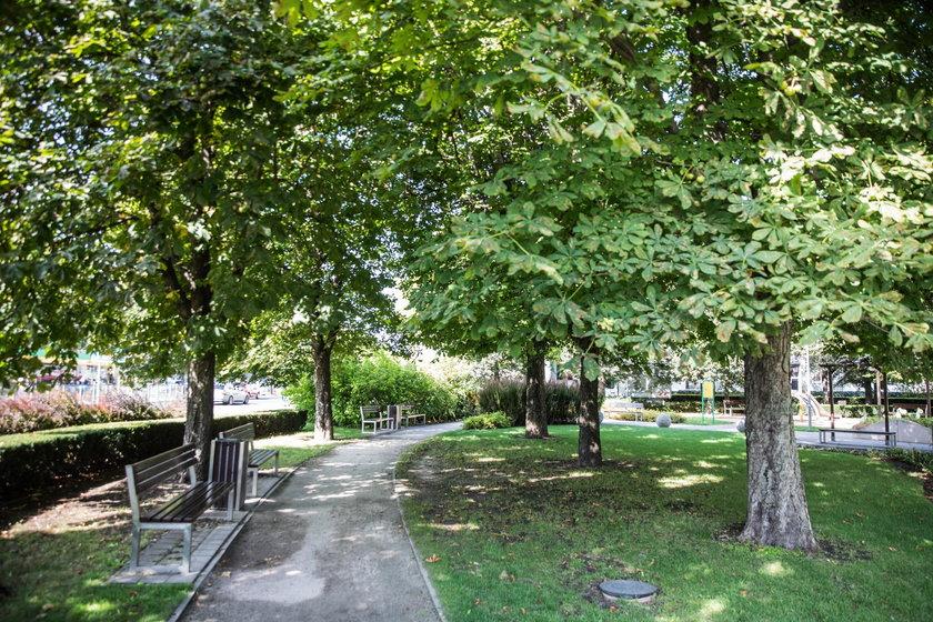 Radny chce by Poznań kupił przesadzarkę drzew