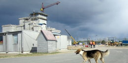 Tajemnicza choroba w Czarnobylu. Naukowcy bezradni
