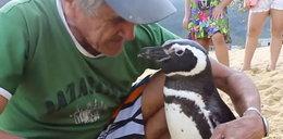 """Niezwykła przyjaźń człowieka i pingwina. """"Kocham go jak własne dziecko"""""""