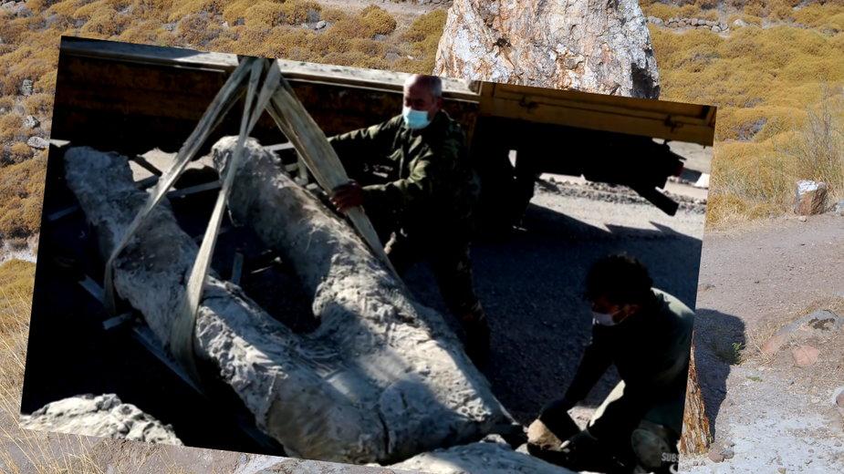 Odkryto skamieniałości drzewa sprzed 20 mln lat na greckiej wyspie Lesbos
