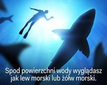 AWIDEO_446_Coyote_Peterson_explains_what_most_people_get_wrong_about_sharks_v2