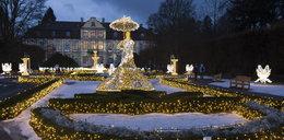 W Oliwie nie będzie już świątecznej iluminacji?
