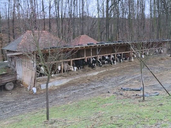 Farma Nedeljka Bojkića