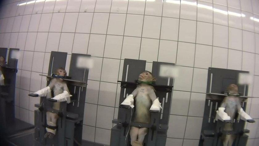 Kadr z filmu pokazującego okrucieństwo w czasie eksperymentów w niemieckim laboratorium