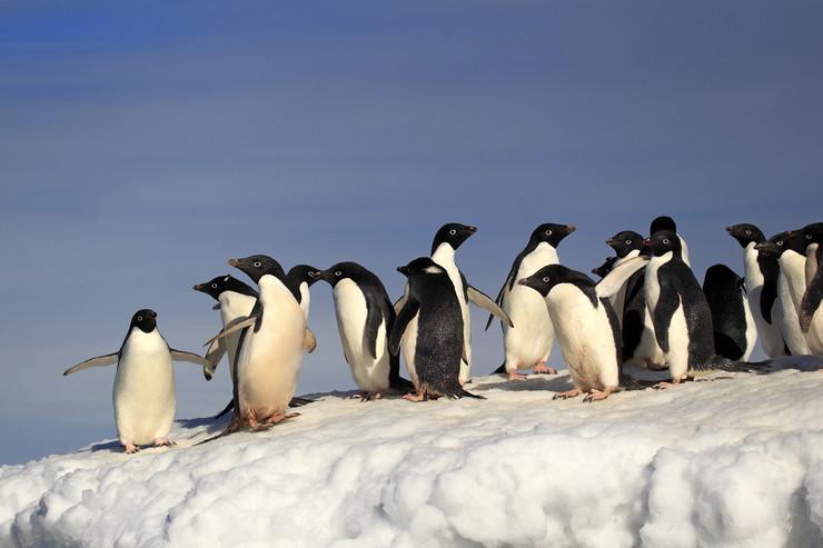 pingvini foto profimedia rs