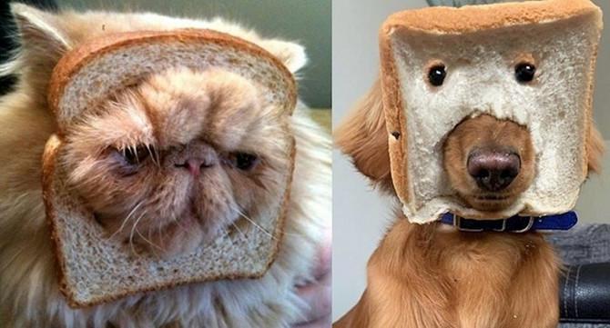 Hleb kao modni detalj