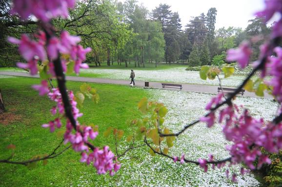 Temperature iznad proseka uzrokuju ranije cvetanje prirode