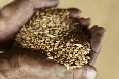 Izvoz poljoprivrednih proizvoda zabeležio rast