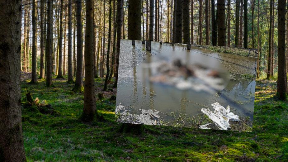 Na terenie Nadleśnictwa Bartoszyce znaleziono szczątki zwierząt hodowlanych