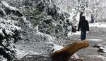 SNEŽNI PROBLEMI U NOVOM SADU Veliko stablo palo na automobil dok je vozač bio UNUTRA