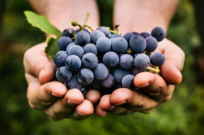 Voće i povrće je bogato polifenolima