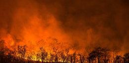 Kontrowersyjny wpis Cejrowskiego. Nie wierzy w płonące lasy Amazonii?