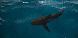 Atak rekina. Wędkarz się tego nie spodziewał