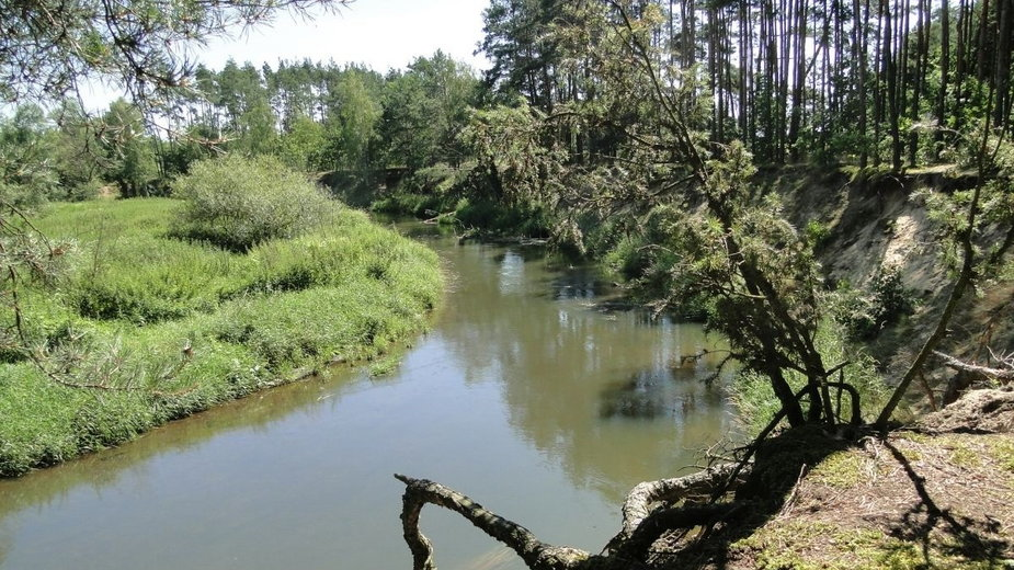 """Rzeka Liswarta, Park Krajobrazowy """"Lasy Nad Górną Liswartą"""""""
