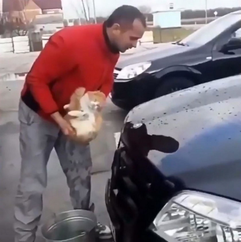 Idiota zrobił to z kotem! Szokujące nagranie