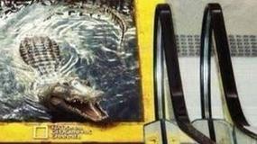 Krokodyl na ruchomych schodach - przerażająca reklama National Geographic w Brazylii