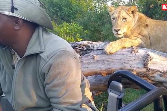 Dok su posmatrali krdo lavova, iza leđa im se prikrao OPASNI GOST