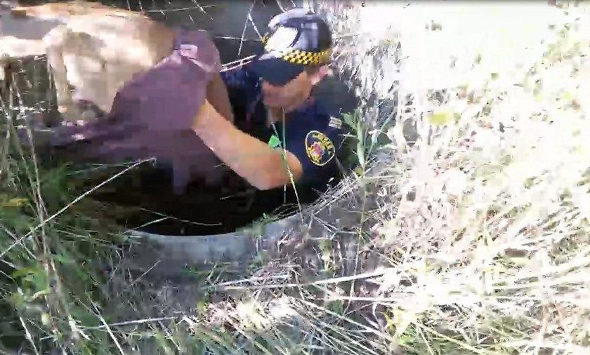 Krakowscy strażnicy miejscy uratowali sarenkę