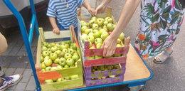 Jabłka i gruszki trafiły do zwierzaków w zoo