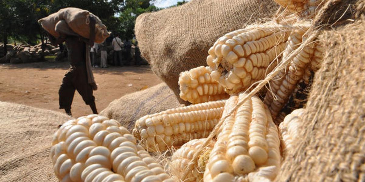 CBN FX Restriction List: Wheat, Sugar importation ban