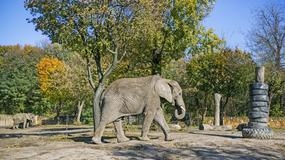 Warszawskie zoo świętuje 90. rocznicę otwarcia
