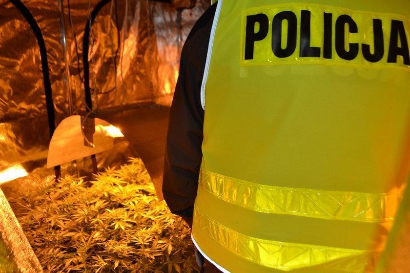 Poznańska policja zlikwidowała kolejną plantację marihuany