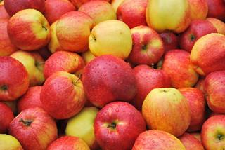 Polscy sadownicy wycofują jabłka za unijne rekompensaty. Będą redukcje