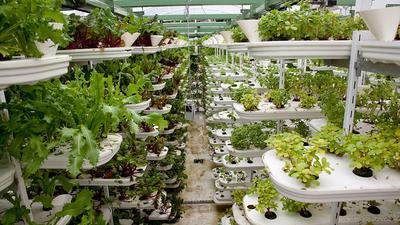 Roślinny biznes wyceniany na miliardy