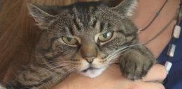 Zrozpaczona właścicielka: Przestańcie golić kota!
