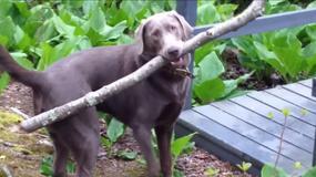 Zobacz, jak uroczy pies poradził sobie z przeszkodą