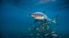 Tydzień z rekinami w Nat Geo Wild od 21 do 26 sierpnia