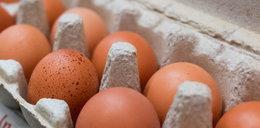 GIS ostrzega: Salmonella na jajkach!