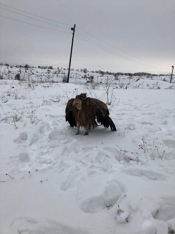 Promrzla i gladna dobrila 12. decembra pronađena u Turskoj