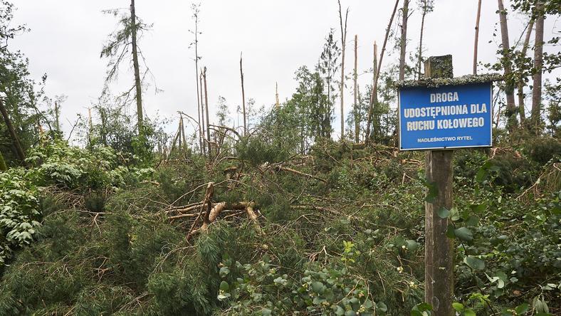 Okolice obozowiska w Suszku, gdzie zginęły dwie harcerki