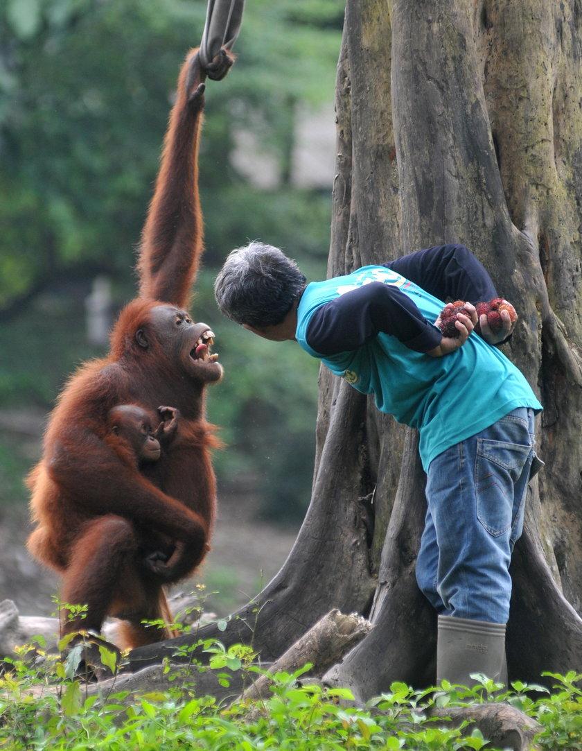 Kłótnia małpy i człowieka