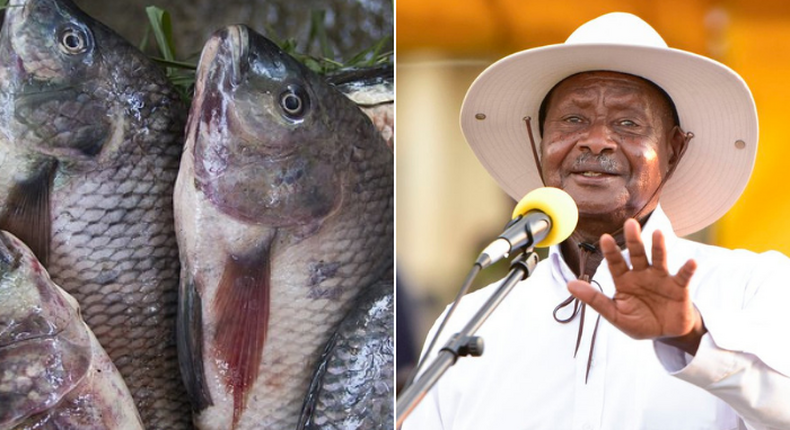 Museveni's men are making us eat raw fish - President Uhuru Kenyatta receives urgent appeal from Busia fishermen