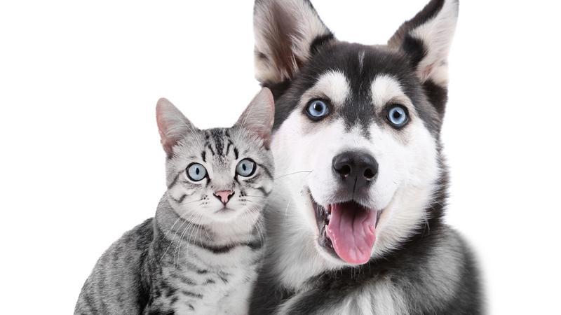 Tajwan wprowadza zakaz konsumpcji oraz sprzedaży mięsa psów i kotów