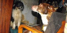 Zwierzęta z Pawiej czekają na pomoc