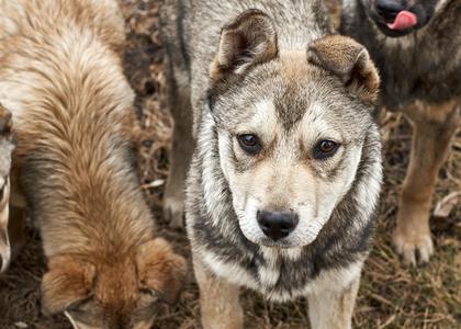 Znalezione obrazy dla zapytania zdjęcia psów