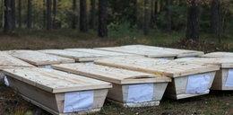 Makabra! W Polsce odnaleziono 12 trumien ze zwłokami ze skradzionego auta