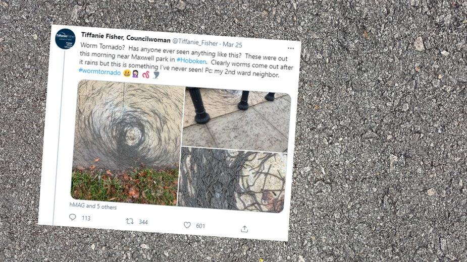 Dżdżownice utworzyły na chodniku kształt tornada