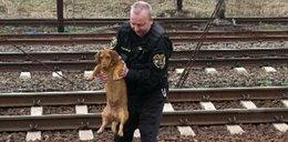 Strażnicy uratowali psa na torach