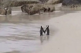 Pingvini prtscn Youtube Thu Huyen