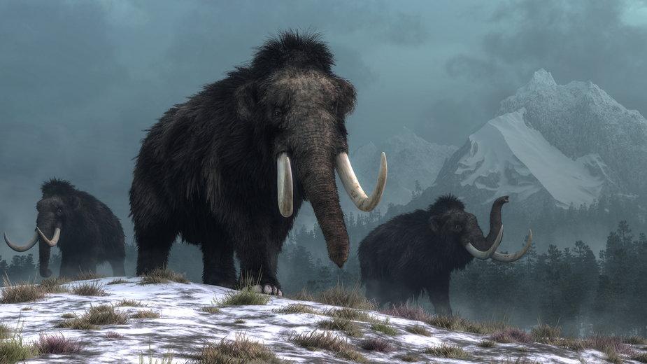 Naukowcy chcą wskrzesić mamuty