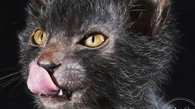 Stworzono nową rasę kotów. Pokochają ją miłośnicy... psów!