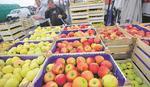 Na snazi zabrana izvoza jabuka u Rusiju
