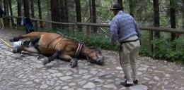 Straszne sceny w Tatrach. Koń padł z wycieńczenia, reakcja woźnicy szokuje. Jest nagranie